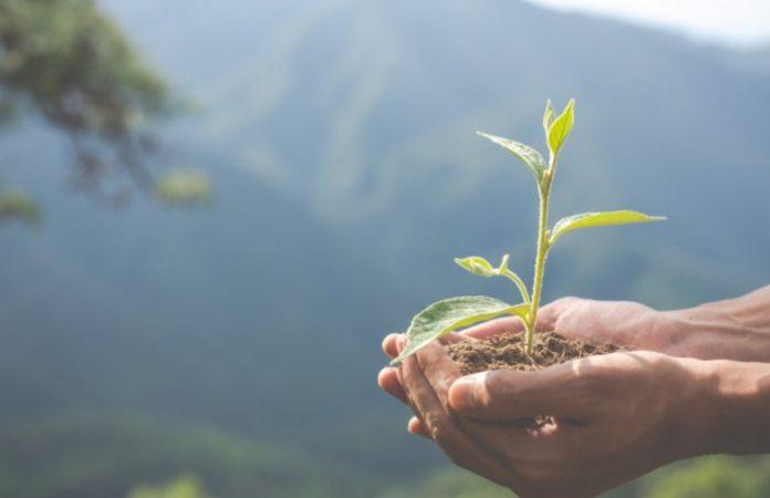 Finance verte: tout comprendre en trois points!